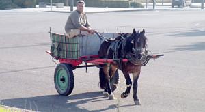 гужевой транспорт Израиль