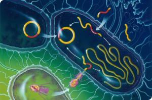 бактерии устойчивые к антибиотикам