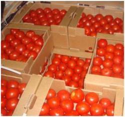 зараженных томатов из Турции