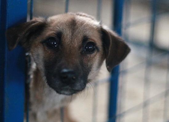 В России ввели запрет на организацию боев с животными